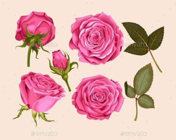 Set of Pink Rose - Flowers & Plants Nature