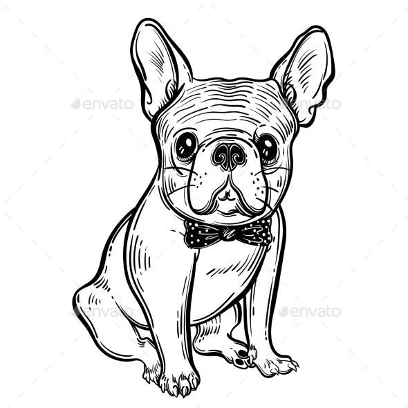 Illustration with French Bulldog - Animals Characters