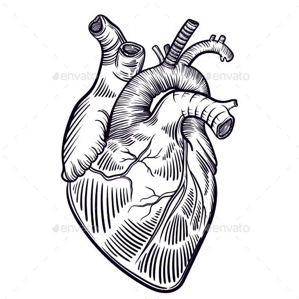 Human Heart - Tattoos Vectors
