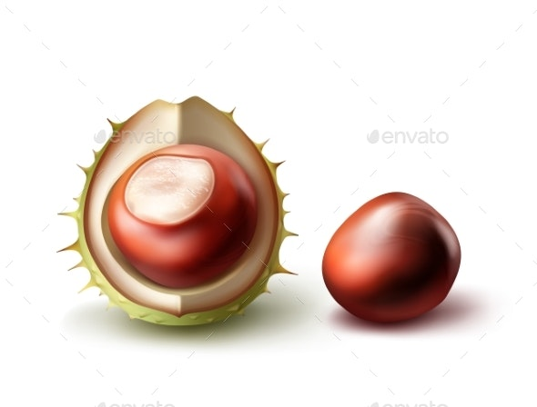 Two Horse Chestnuts - Food Objects