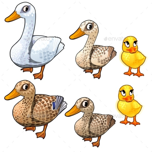 Maturation Stages of Duck, Three Stages of Growth - Animals Characters