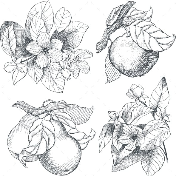 Vintage Botanical Illustration Flowers and Fruits