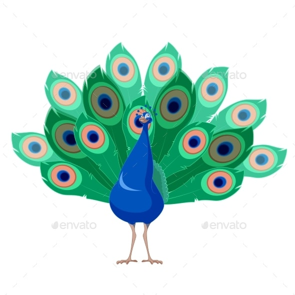 Cartoon Peacock - Animals Characters