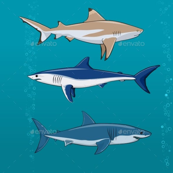 Common Sharks Set Vector Illustration