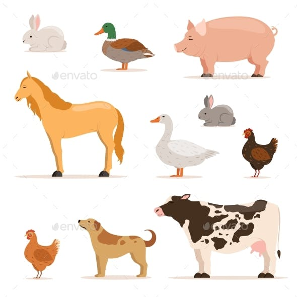 Different Domestic Animals on Farm.