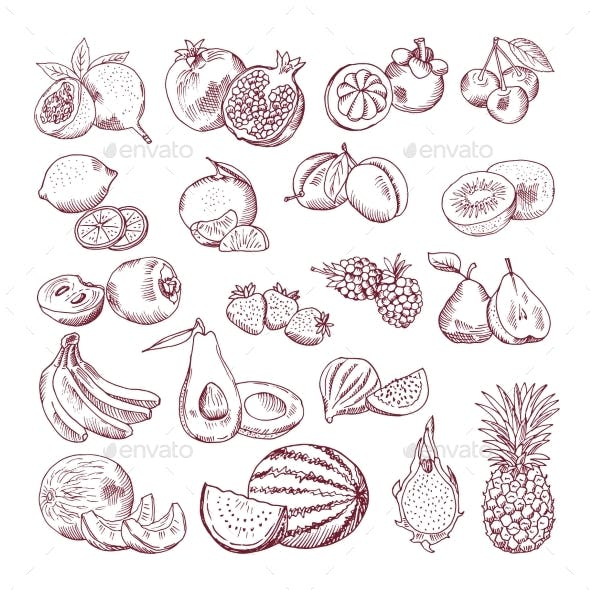 Vector Sketch Fruits for Package Design