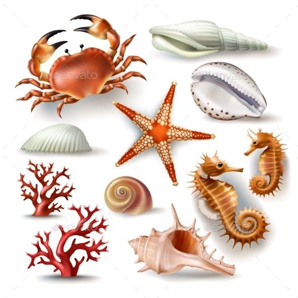 Set of Vector Ocean Illustrations