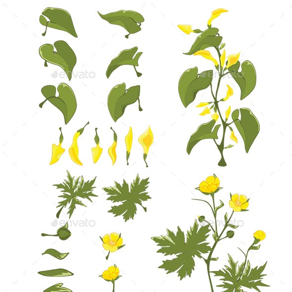 Set of Cartoon Leaves and Flowers for Design