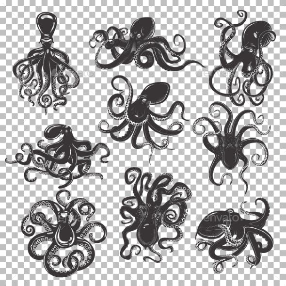 Set of Isolated Octopus Mascot or Tattoos
