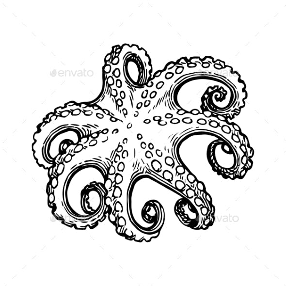 Octopus Ink Sketch.