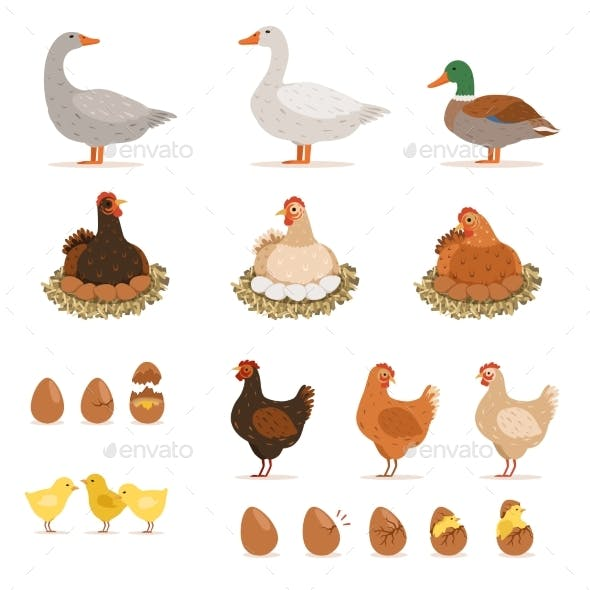 Chickens, Ducks and Other Farm Birds