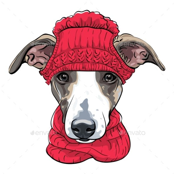 Vector Italian Greyhound Dog Breed