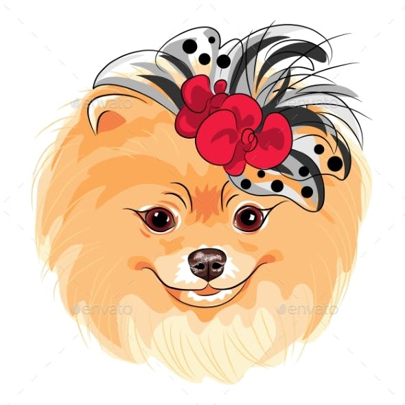 Vector Fashion Dog Pomeranian Breed Smiling