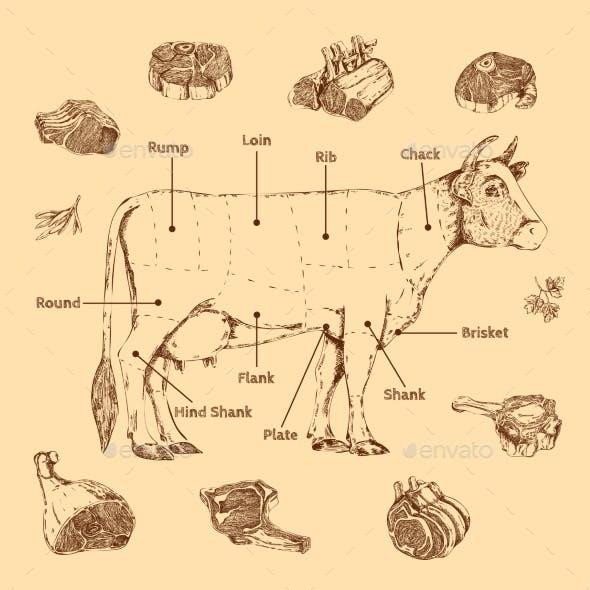 Meat Hand Drawn Scheme