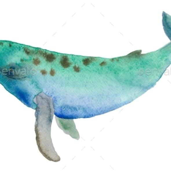 Watercolor Multicolor Whale