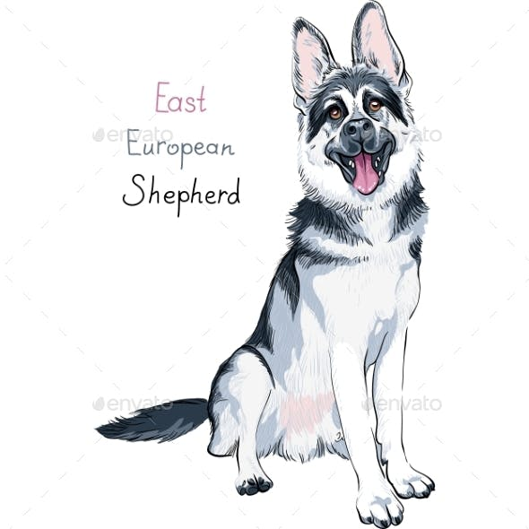 East European Shepherd Breed