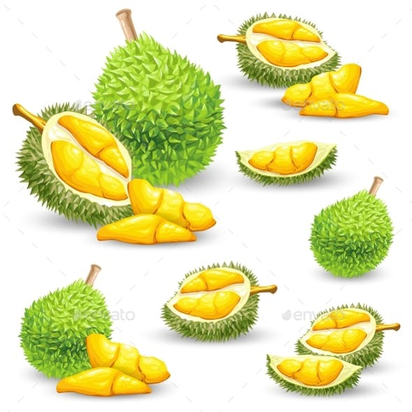 Set of Vector Illustrations, Icons of a Durian