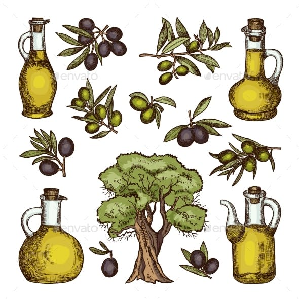 Colored Illustrations of Different Olive Products