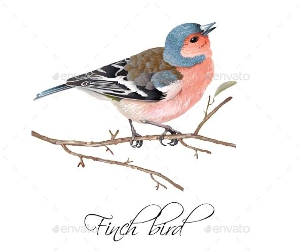 Finch Bird Illustration - Animals Characters