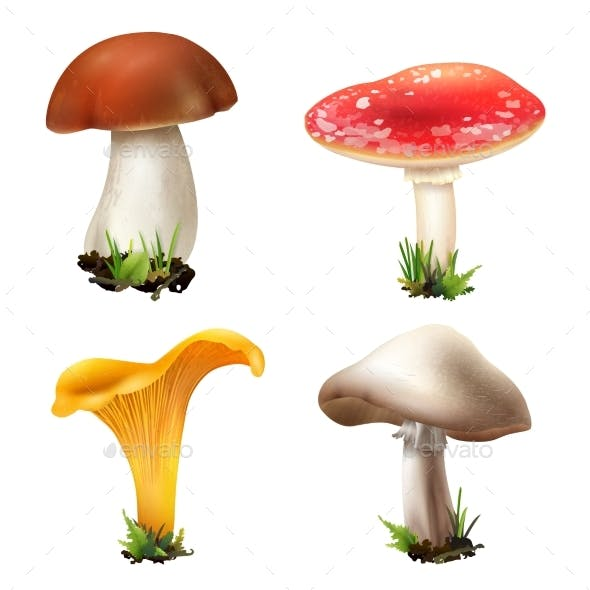 Realistic Forest Mushrooms Collection
