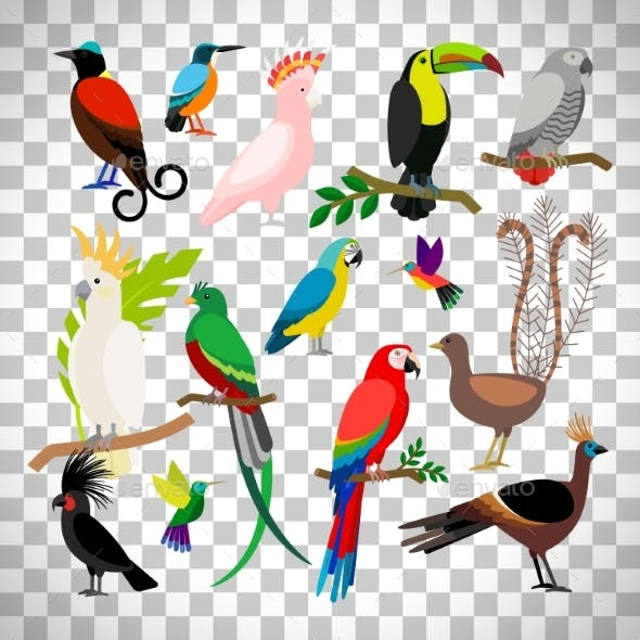Exotic Tropical Birds on Transparent Background