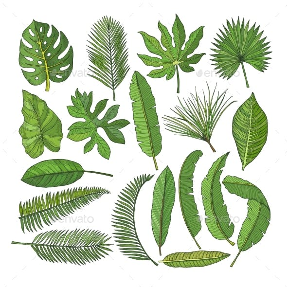 Colored Pictures Set of Tropical Leaves