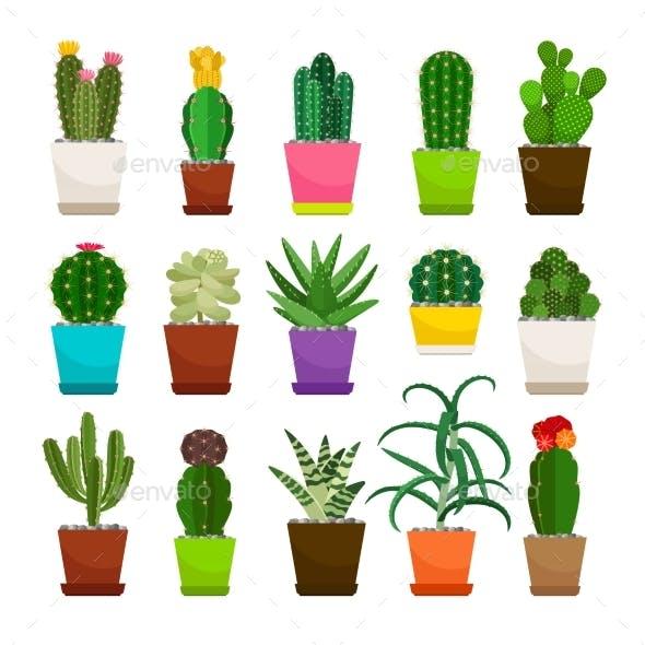 Cactus Houseplants in Flower Pots Set