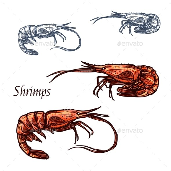 Shrimp Prawn Seafood Vector Isolated Sketch Icon