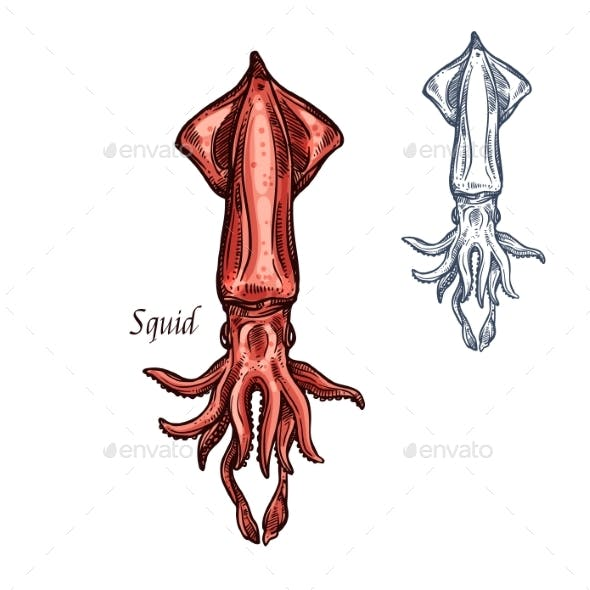 Squid Sketch Seafood Vector Isolated Icon