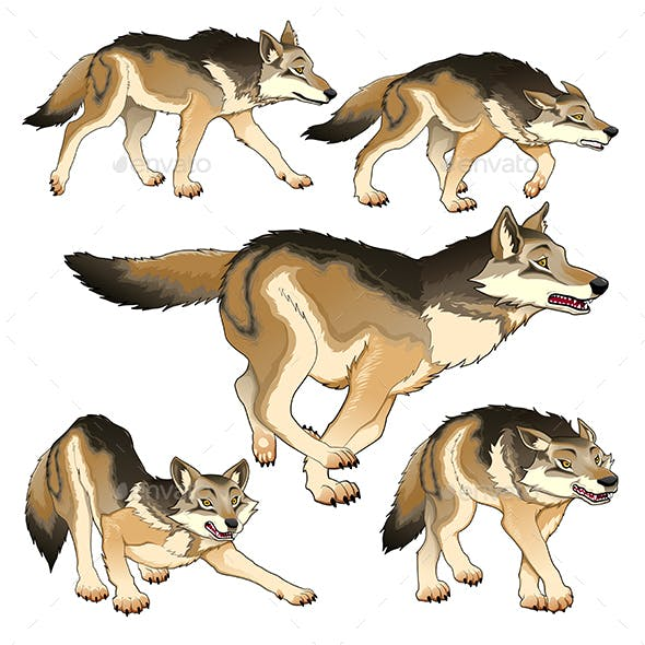 Group of Isolated Wolves