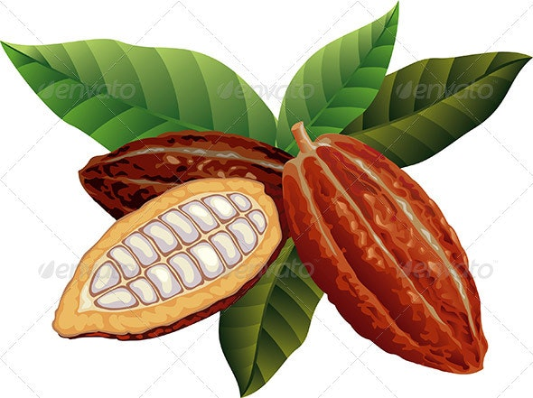 Cocoa beans - Food Objects
