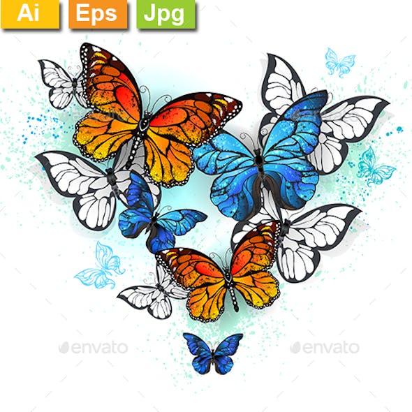 Morpho and Monarchs