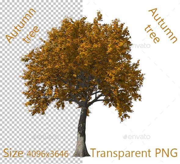 Autumn Tree - Nature Backgrounds