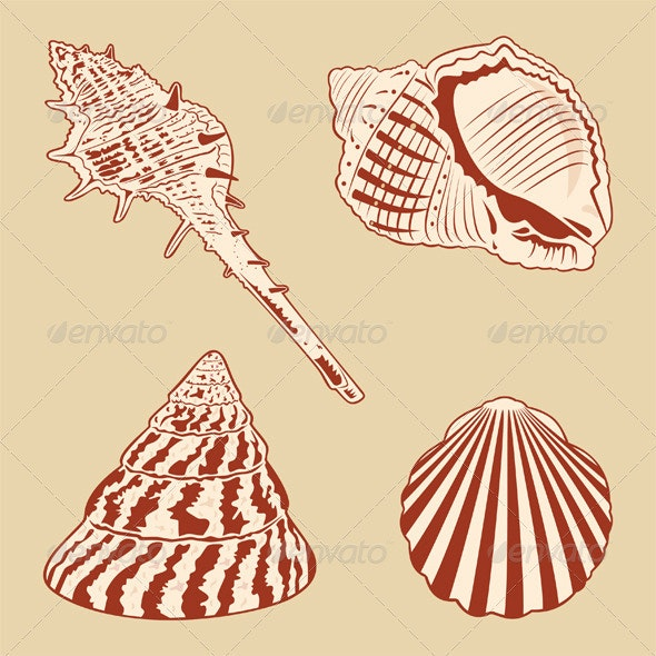 Vintage Shells Set - Organic Objects Objects