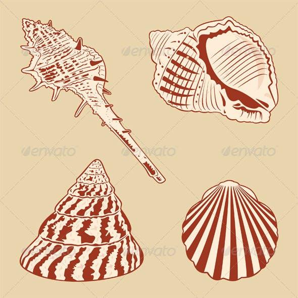 Vintage Shells Set