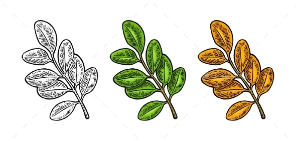Acacia Leaf Spring Green and Autumn Orange - Flowers & Plants Nature