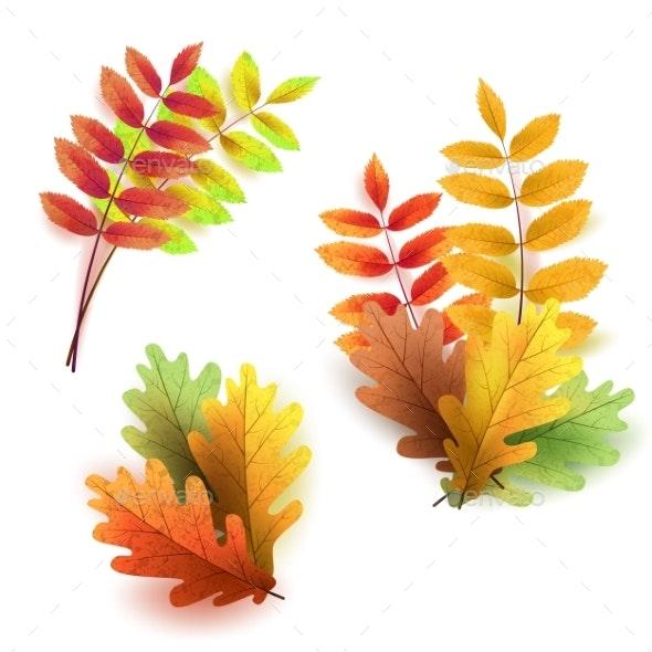 Autumn Leaves Set - Flowers & Plants Nature