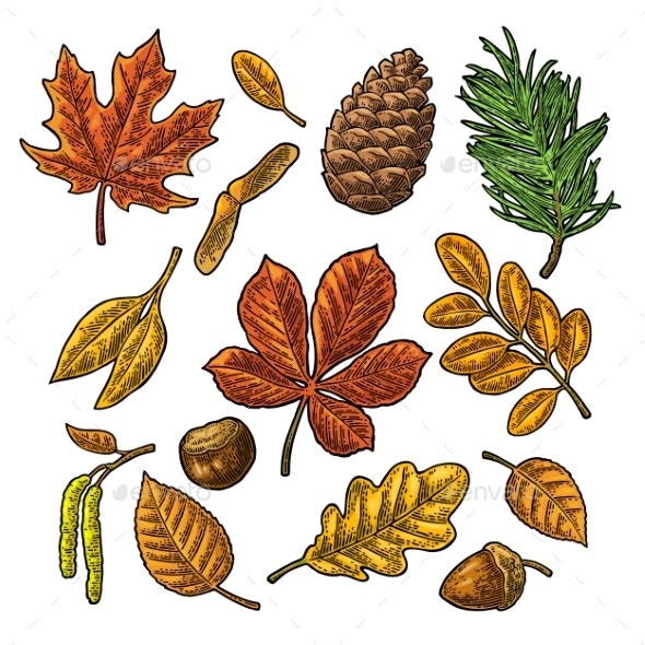 Leaf and Seed Set - Miscellaneous Vectors