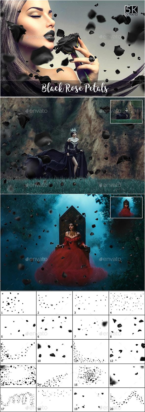 5K Black Petals Overlays - Nature Backgrounds