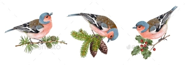 Finch Birds Set - Animals Characters