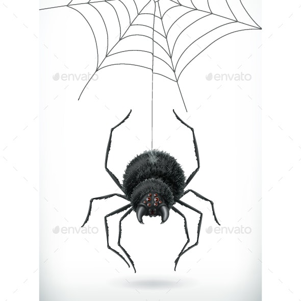 Spider 3d Vector - Animals Characters