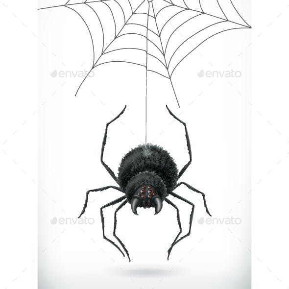 Spider 3d Vector