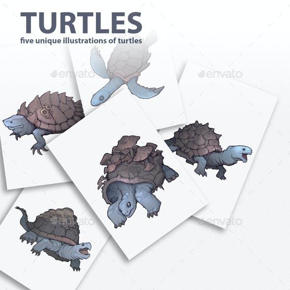 Turtles Illustrations