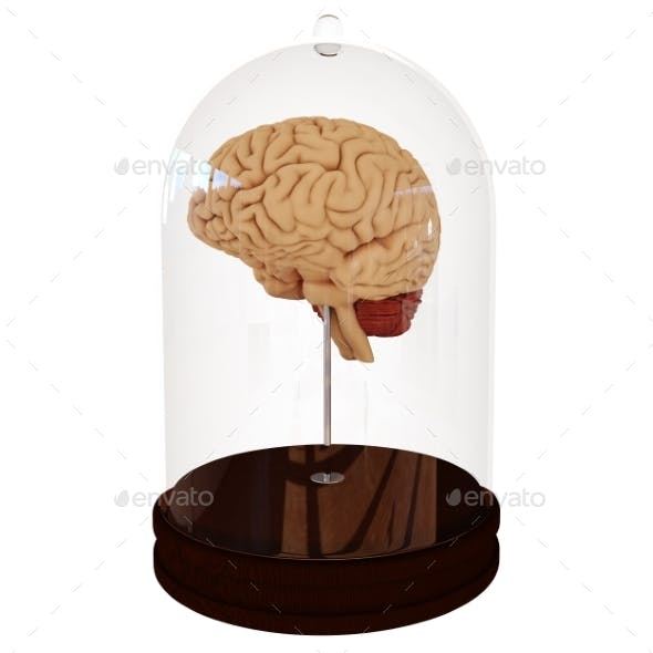 Human Brain in a Jar. 3D Render