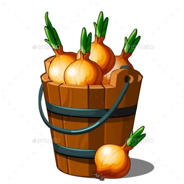 Wooden Bucket Full of Onions. Autumn Harvest