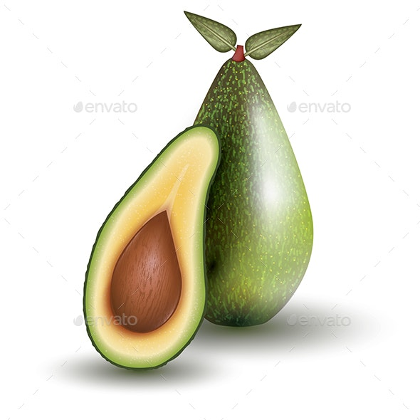 Avocado Isolated on White Background. Vector Illustration. - Food Objects