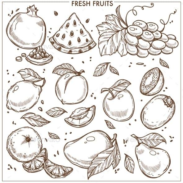 Fruits Sketch