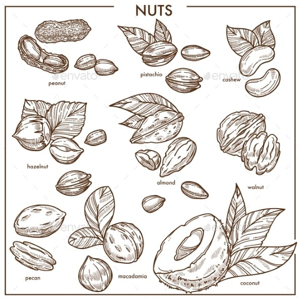 Nuts Sketch Icons Set