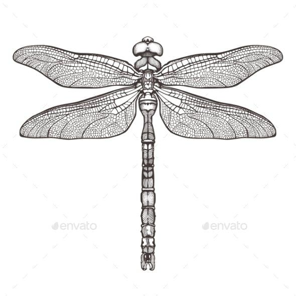 Black Dragonfly Aeschna Viridls Isolated on White