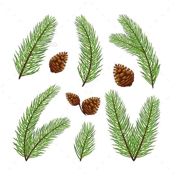 Christmas Tree Branches With Pine Cones Flowers Plants Nature